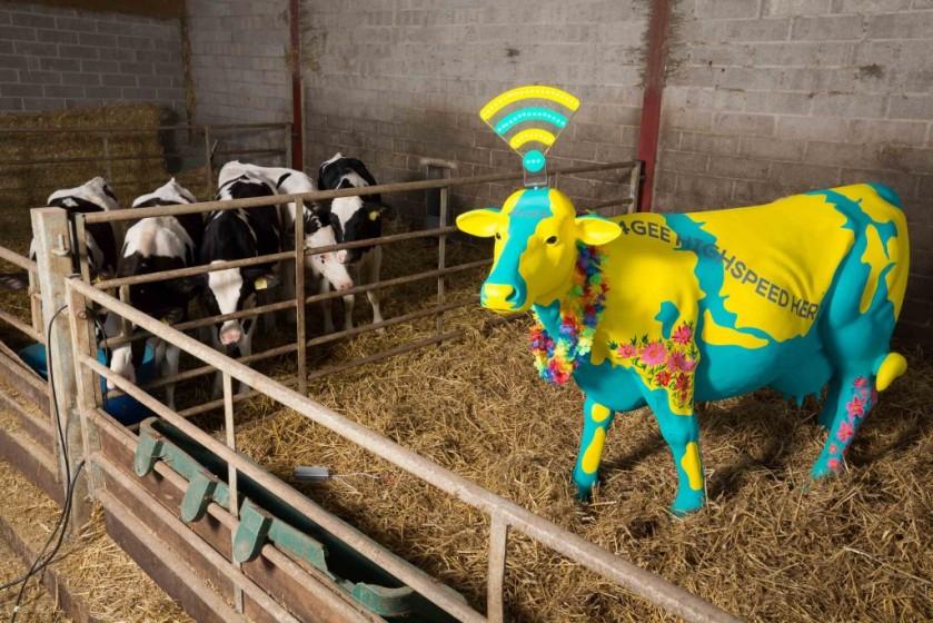 EE Highspeed Herd and Worthy Farm Cows